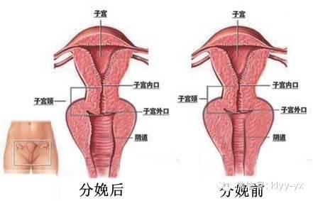 耻骨位置图(男士耻骨位置图)